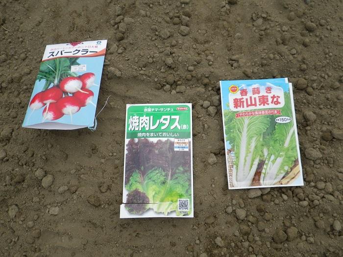 種蒔き3_16_03_05
