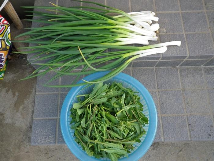 収穫16_03_18