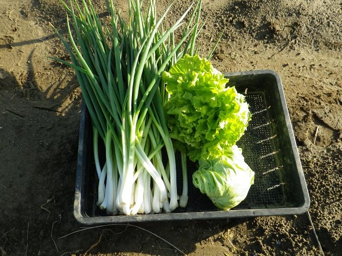 収穫2_16_03_19
