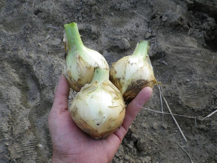 収穫3_16_04_02