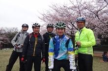 16sakura0161s.jpg