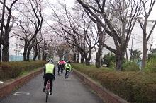 16sakura0165s.jpg