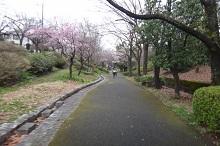 16sakura0167s.jpg