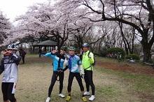 16sakura0195s.jpg