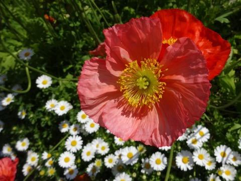 160329-5flower