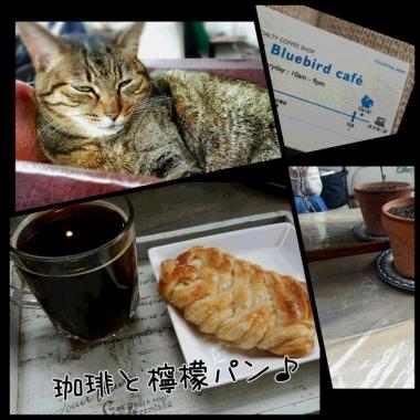 PhotoGrid_1457425846937.jpg