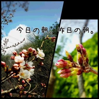 PhotoGrid_1458788426915.jpg