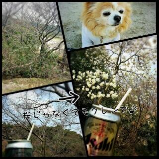 PhotoGrid_1459144222791.jpg