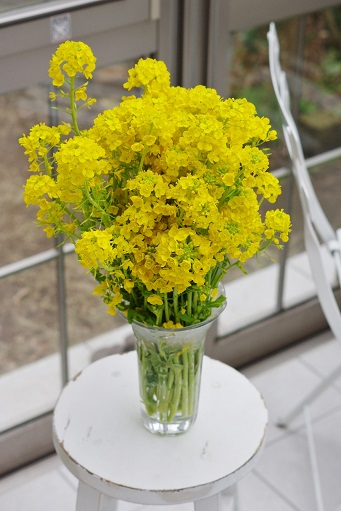 2-20菜の花④