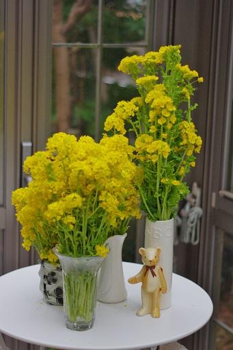 2-20菜の花③