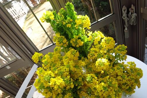 2-20菜の花②