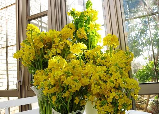 2-17菜の花