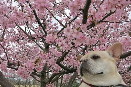 3-15うたと桜②