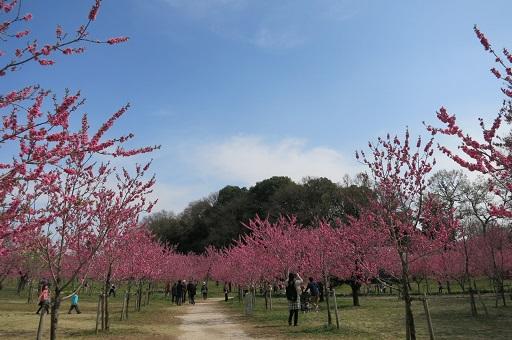 4-4桃若い木