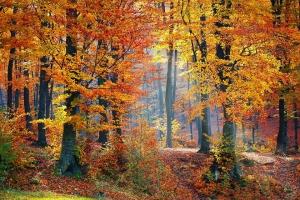 woods-1072819_960_720.jpg