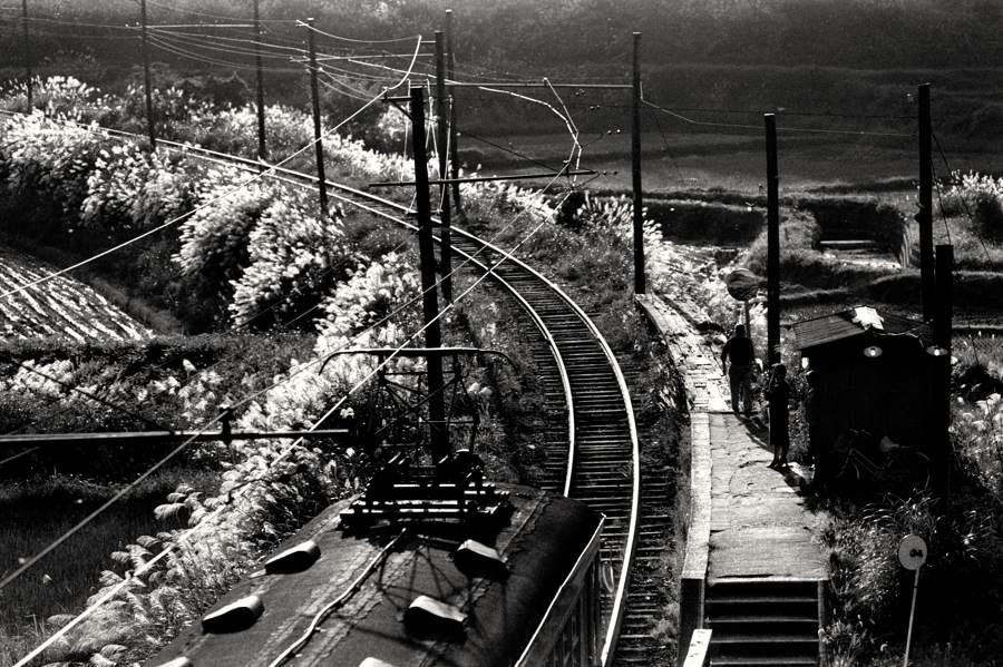 蒲原鉄道 高松駅ススキ2 1982年10月3日 16bitAdobeRGB原版 take1b