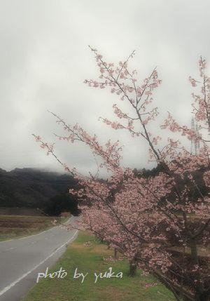 桜2016-1