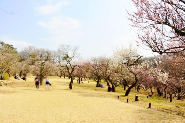 国営 武蔵丘陵森林公園 (4)