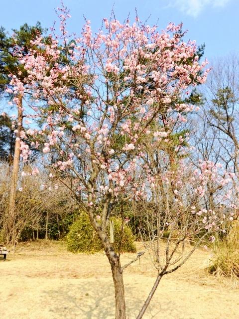 国営 武蔵丘陵森林公園 (5)