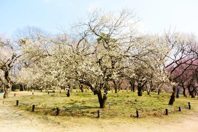 国営 武蔵丘陵森林公園 (6)