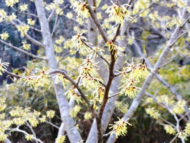 国営 武蔵丘陵森林公園 (8)