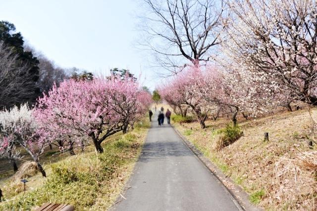 国営 武蔵丘陵森林公園 (9)