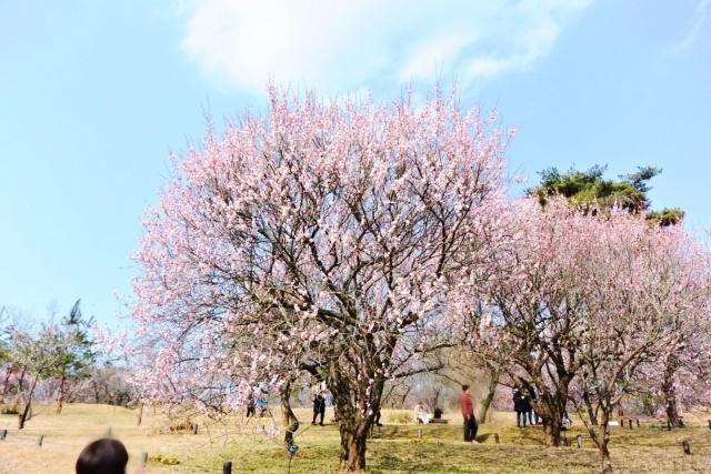 国営 武蔵丘陵森林公園 (10)