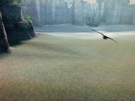 鷹のお散歩