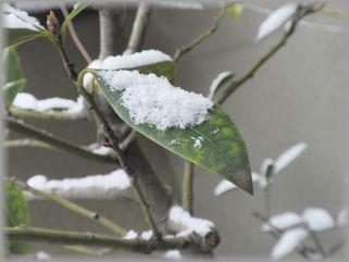 雪とはっぱ