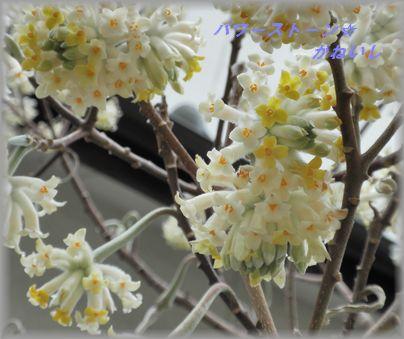 白花たくさん