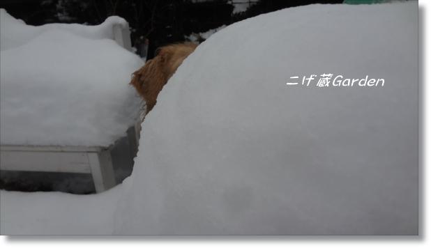 DSC08416_R.jpg
