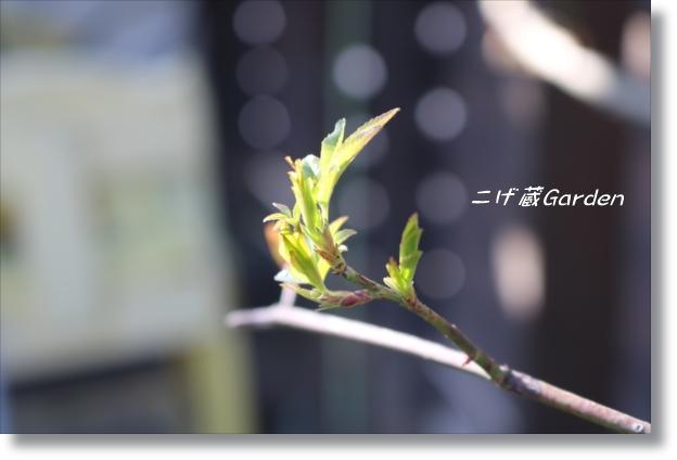 IMG_0206_R.jpg