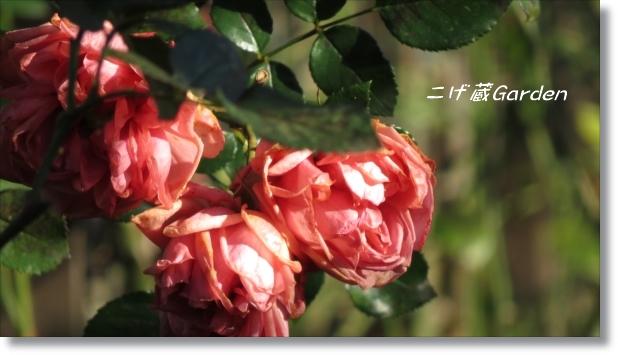 IMG_0423_R.jpg
