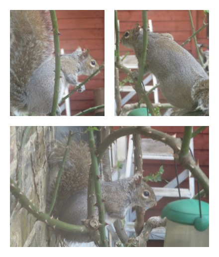 201603Squirrel_1.jpg