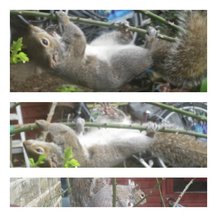 201603Squirrel_2.jpg