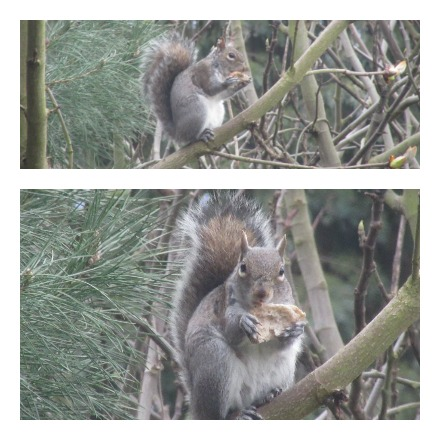 20160403Squirrel_2.jpg