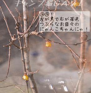 160301_2076c.jpg