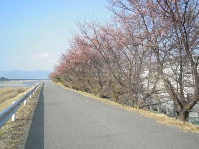 酒匂川左岸160228