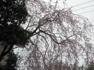 桜神社に出る手前160401