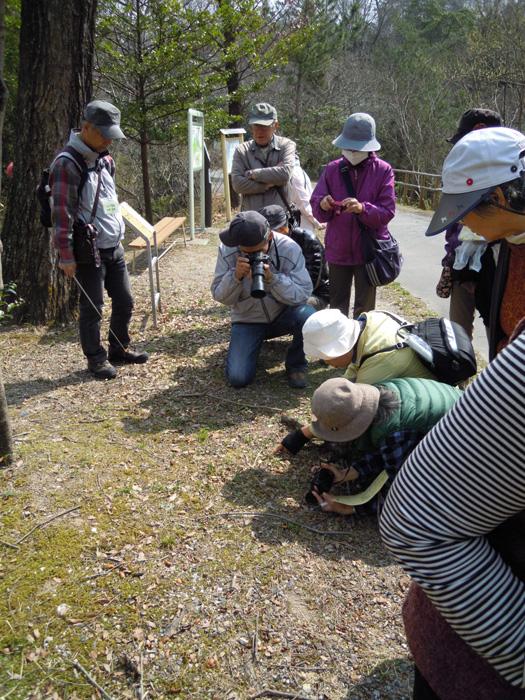 スミレを撮影する参加者。
