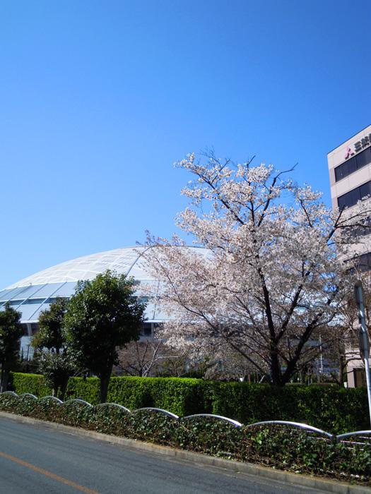 名古屋ドーム。