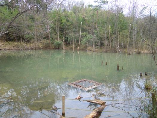 ハンノキ湿地。