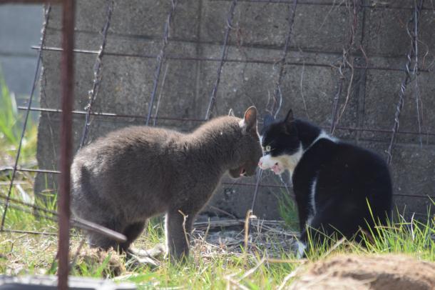 猫28,29