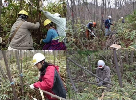 エゴノキプロジェクト15・伐採
