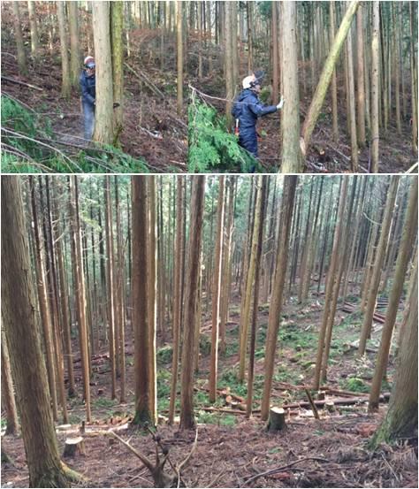 中野方水源の森・間伐後