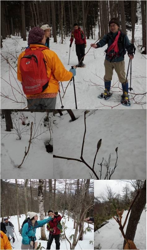 二本木・冬芽