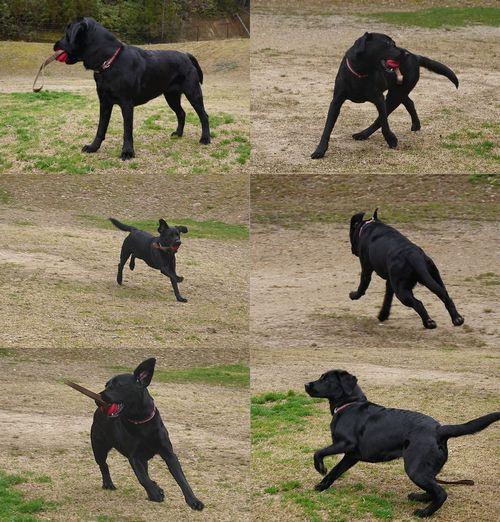 20160310 P1130428 popdog