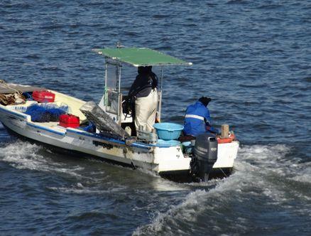荒川でシジミ漁?
