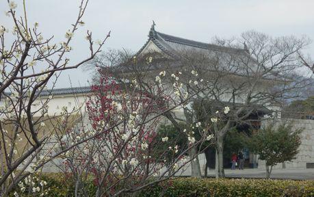 梅が咲き始めた赤穂城