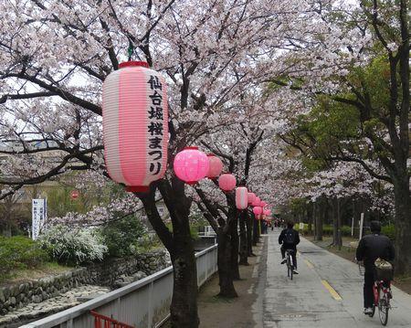仙台堀の桜